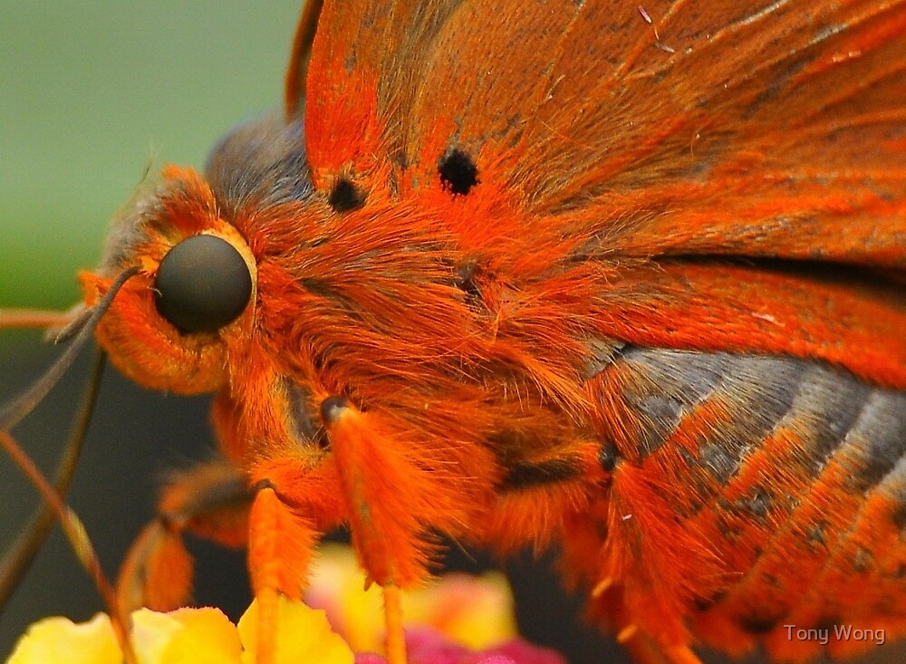 Branded Orange Awl  15 by Tony Wong