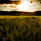 Sunny field by Vegard Giskehaug