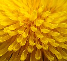 Sunny D.  by Eugenio