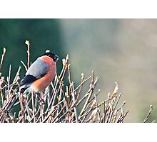 Colourful Character Photographic Print