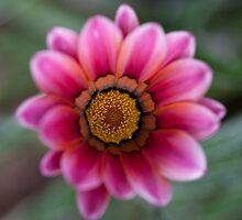 Pollen by Ben Herman