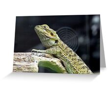 The Frilled Lizard Greeting Card