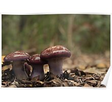 Little Mushrooms in the National Park Poster