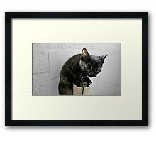 They Call Me Naughty Tortie Framed Print