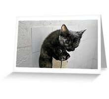 They Call Me Naughty Tortie Greeting Card