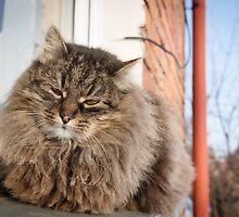 cat pet by Claraveritas