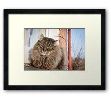 cat pet Framed Print