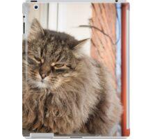 cat pet iPad Case/Skin