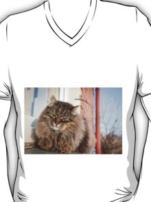 cat pet T-Shirt