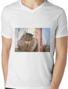 cat pet Mens V-Neck T-Shirt