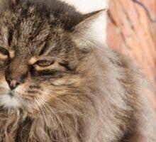 cat pet Sticker