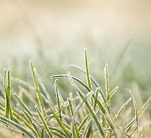 frost on grass by Claraveritas