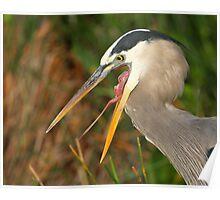 Great Blue Heron Exposure Poster