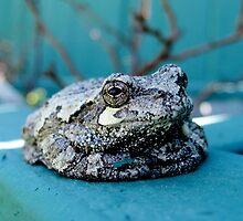 Polite Tree Frog by AlphaEyePhoto