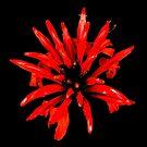 Red Petal Pattern by TonyCrehan