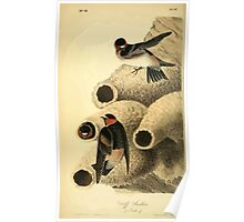 James Audubon Vector Rebuild - The Birds of America - From Drawings Made in the United States and Their Territories V 1-7 1840 - Cliff Swallow Poster