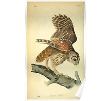 James Audubon Vector Rebuild - The Birds of America - From Drawings Made in the United States and Their Territories V 1-7 1840 - Barred Owl Poster