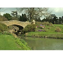 titsey gardens bridge Photographic Print