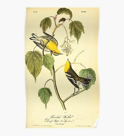 James Audubon Vector Rebuild - The Birds of America - From Drawings Made in the United States and Their Territories V 1-7 1840 - Hemlock Warbler Poster