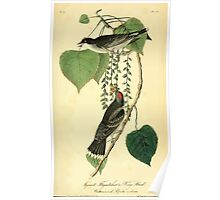 James Audubon Vector Rebuild - The Birds of America - From Drawings Made in the United States and Their Territories V 1-7 1840 - Tyrant Flycatcher or King Bird Poster