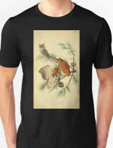 James Audubon Vector Rebuild - The Birds of America - From Drawings Made in the United States and Their Territories V 1-7 1840 - Little Screech Owl T-Shirt