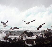 Gulls in Flight by Polly Peacock