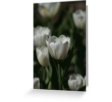 Holland Michigan Tulips Greeting Card