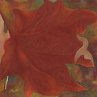 Autumn leaf by Barbara Weir