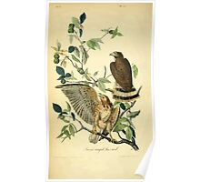 James Audubon Vector Rebuild - The Birds of America - From Drawings Made in the United States and Their Territories V 1-7 1840 - Broad Winged Buzzard Poster