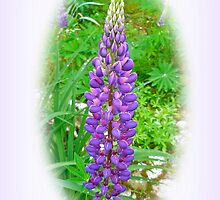Purple Lupine Flowers by MotherNature