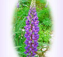 Purple Lupine Flowers by MotherNature