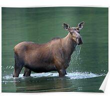 Moose & Emerald Pool Poster