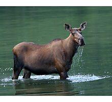Moose & Emerald Pool Photographic Print