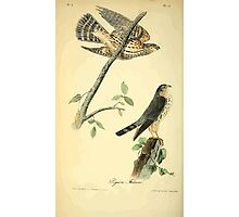 James Audubon Vector Rebuild - The Birds of America - From Drawings Made in the United States and Their Territories V 1-7 1840 - Pigeon Falcon Photographic Print