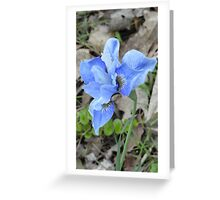 Purple Dutch Iris Greeting Card