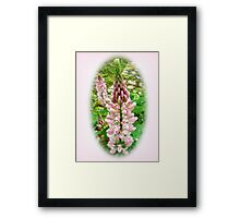 Pink Lupin Flowers Framed Print