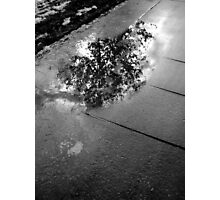 What's in a Puddle Photographic Print