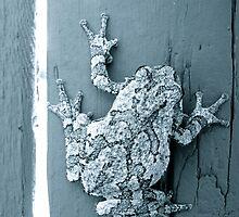 Tree Frog by AlphaEyePhoto