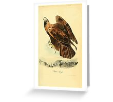 James Audubon Vector Rebuild - The Birds of America - From Drawings Made in the United States and Their Territories V 1-7 1840 - Golden Eagle Greeting Card