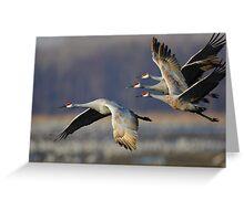 Sandhill Cranes in Flight Greeting Card