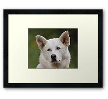 Working Dog Portrait Framed Print