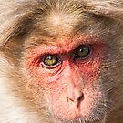 Animal Portraits by Nickolay Stanev