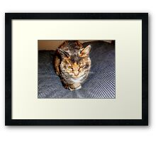 A Cat Named Peaches Framed Print