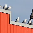 Birds on the Roof by henuly1