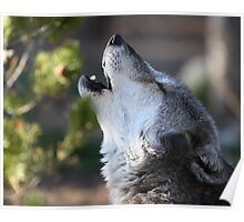 Wolf Howling Poster