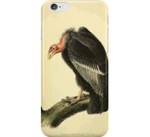 James Audubon Vector Rebuild - The Birds of America - From Drawings Made in the United States and Their Territories V 1-7 1840 - California Turkey Vulture iPhone Case/Skin