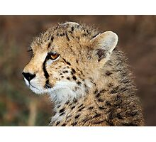 CHEETAH CUB - KENYA Photographic Print