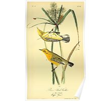 James Audubon Vector Rebuild - The Birds of America - From Drawings Made in the United States and Their Territories V 1-7 1840 - Prarie Wood Warbler Poster