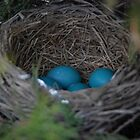 Robin's Eggs by Vonnie Murfin