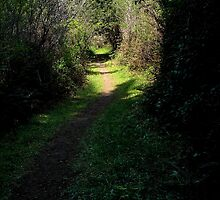 Take the Magical Path by Mary Ellen Tuite Photography